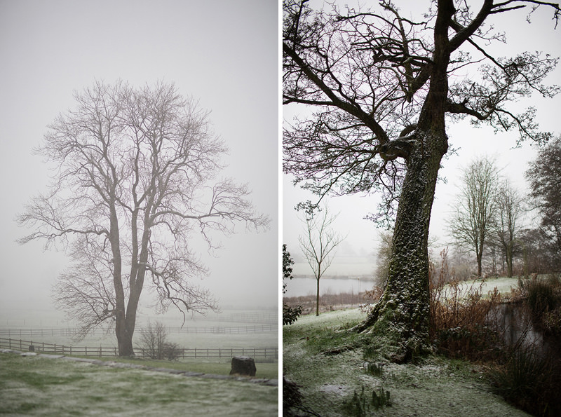 Ashes Endon Winter Weddings Trees